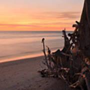Driftwood At Sunset Art Print