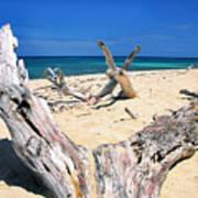 Driftwood Buck Island National Park Art Print