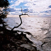 Driftwood Dragon-barnegat Bay Art Print
