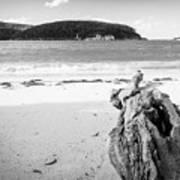 Driftwood On Beach Black And White Art Print