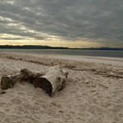 Driftwood On West Sands Art Print