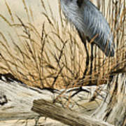 Driftwood Splendor Art Print