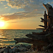Driftwood Sunset Art Print
