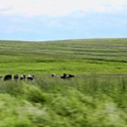 Driveby Shooting No.17 Cows Art Print