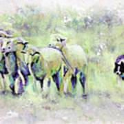 Driving Sheep Art Print