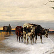 Driving The Herd Home In Wintry Landscape Art Print