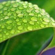 Droplets Of Hope Art Print
