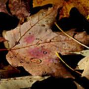Droplets On Fallen Leaves Art Print