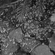 Droplets Art Print
