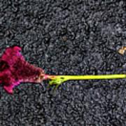 Dropped Flower Art Print