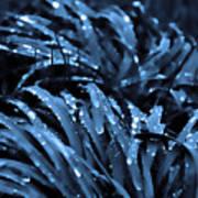 Drops And Blue Grass Art Print
