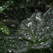 Drops And Leaf Art Print