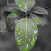 Drops Of Color 1 Art Print