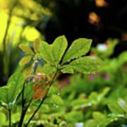 Drops On Plants After Morning Rain Art Print