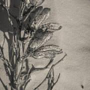 Dry Desert Art Print
