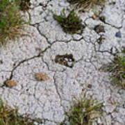 Dry Ground Art Print