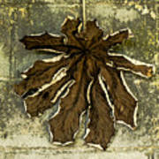 Dry Leaf Collection Natural Art Print