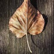 Dry Leaf On Wood Art Print