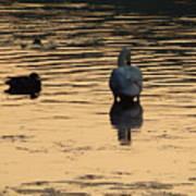 Duck And Swan At Sunrise Art Print