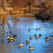 Duck Duck Goose Goose Art Print