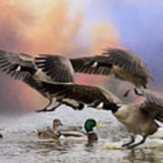 Duck Ducks 2 Art Print