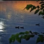 Ducks At Daybreak  Art Print