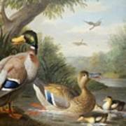 Ducks In A River Landscape Art Print by Jakob Bogdany