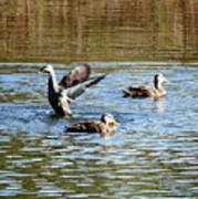 Ducks On Colorful Pond Art Print