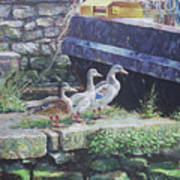 Ducks On Dockside Art Print