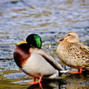 Ducks On Ice Art Print
