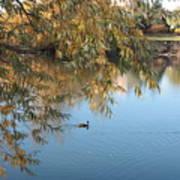 Ducks On Peaceful Autumn Pond Art Print