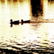 Ducks On Pond 1 Art Print