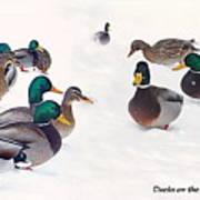 Ducks On The Snow Art Print