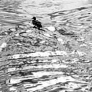 Ducks Swirl Art Print