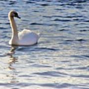 Duddingston Swan 1 Art Print