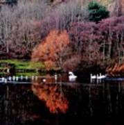 Duddingston Swan 17 Art Print