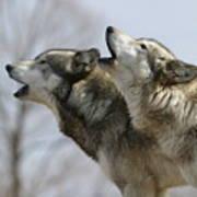 Duet Howl Art Print