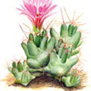 Dumpling Cactus Art Print