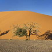 Dune 45 And Trees Art Print