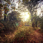 Dunmore Wood - Autumnal Morning Art Print