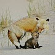 Dunr Fox Father And Child Art Print