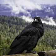 Dunraven Raven Art Print