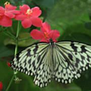 Durham Butterfly #5 Art Print
