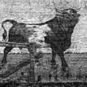 Durham's Bull Art Print