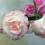 Dutch Frilled Roses Art Print