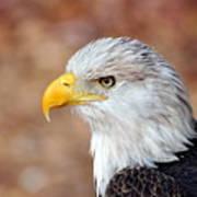 Eagle 10 Art Print