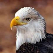 Eagle 25 Art Print