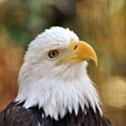 Eagle 9 Art Print