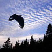 Eagle At Dawn Art Print