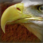 Eagle Beak Power Art Print